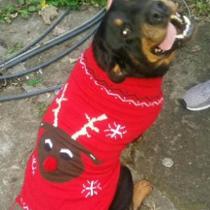 Large Dog Christmas Jumpers